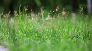 Stock Video Footage of Grass