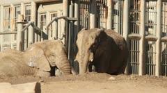 Elephant Bath Stock Footage