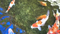 Tranquil Koi Fish Pond with Water Reflection 1080p Panning Stock Footage
