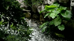 Stream with plants on the rock. Stock Footage
