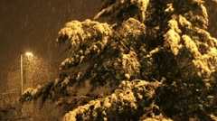 Tree in snow winter in the night Stock Footage