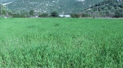 Grassy meadow Stock Footage
