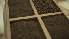Freshly processed tea leaves - stock footage