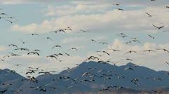 Birds Fly Towards Mountains Stock Footage
