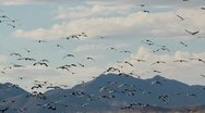 Stock Video Footage of Birds Fly Towards Mountains