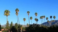 Stock Video Footage of Palm Tree Pasadena Morning 2