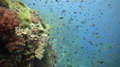 School of small fish over coral reef - stock footage