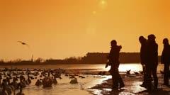 Stock Video Footage of People Feeding Migratory Birds in Winter