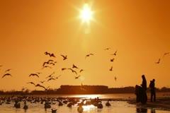 Stock Video Footage of Migratory Birds in Winter