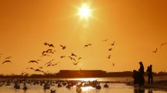 Migratory Birds in Winter Stock Footage