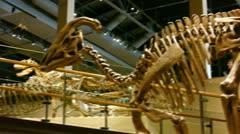 Dinosaur Bones Stock Footage