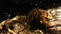 Dinosaur track Stock Footage