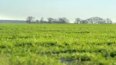 Winter grass loop - stock footage