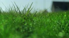 Winter grass loop 2 - stock footage