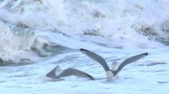 Seagulls-Winter-Denmark-012 - stock footage