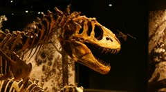 Dinosaur Bony - stock footage