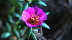Flower - Slow Timelapse 6 Arkistovideo