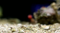 Seabed focusing Stock Footage