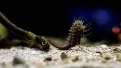 Seahorse and blue background Stock Footage