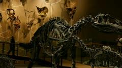 Dinosaur display Stock Footage
