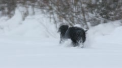 Dog in the snow - stock footage