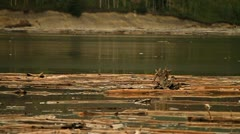 Logs floating in river Stock Footage
