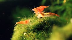 Shrimps 03 Stock Footage