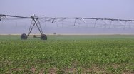 Stock Video Footage of Irrigation of the field