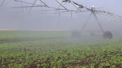 Irrigation of the field - stock footage
