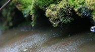 Stock Video Footage of Rain water stream through moss