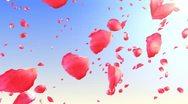Flying rose petals in the sky. HD. Loop. Stock Footage