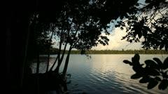 Lagoon In Rainforest Stock Footage