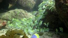 School of fish feeding Stock Footage