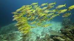 School of fish underwater marine life Stock Footage