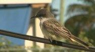 Bird on Wire Stock Footage