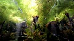 Slikes and seaweed Stock Footage