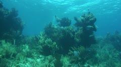 Bahamian Reef Stock Footage