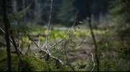 Stock Video Footage of Dark Forest Rack Focus to Bright Wildflowers