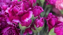 Pink Flowers Sliding View Stock Footage