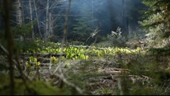 Smoke Drifting Through Meadow of Wildflowers Stock Footage