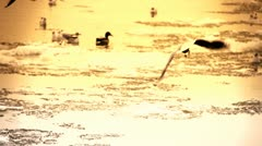 Seagulls over Icy River 16 city stylized with sound Stock Footage