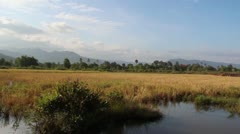 AGRICULTURE: WS pan left across brown rice fields with mountain backdrop Stock Footage