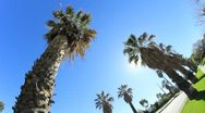 Stock Video Footage of L.A. Palm Trees Sunny Street