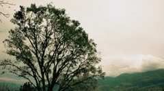 tree in the wind - stock footage