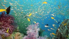 Colorful coral reef with tons of fish - stock footage