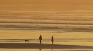 Stock Video Footage of People Playing with Dog at Beach