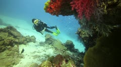 Scuba diver colorfull coral reef Stock Footage