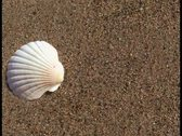 Seashell V2 - PAL Stock Footage