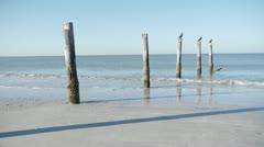 Three ducks on pier posts on Fort Myers Beach Shoreline Stock Footage