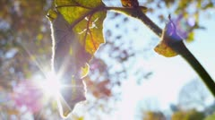 Inner City Parkland Fall - stock footage